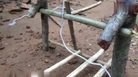 原始技术, 农村小哥演示原始陷阱技术, 竟那自家的猪仔试验