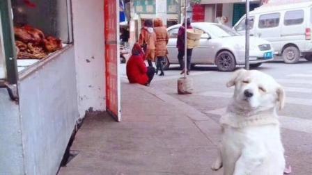 主人带狗子遛弯, 半路扭头发现狗子不见了, 找到后让主人笑哭!