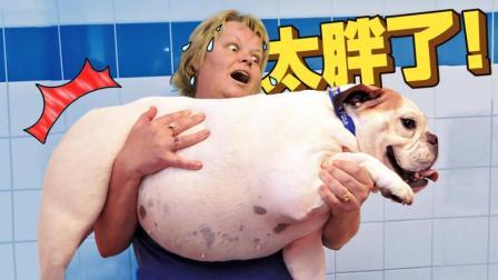 这么胖, 一看就是奶奶带大的宠物!