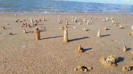 沙滩上到处都是海鲜, 看得都流口水了