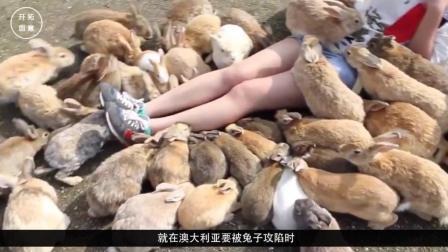 澳大利亚兔子泛滥成灾, 现在用轰炸机处理, 中国吃货看后直流口水