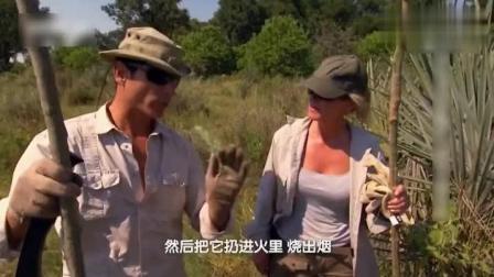 """迈克夫妇在非洲被蚊子围攻, 找到鼠尾草, 是天然的""""驱蚊剂""""!"""