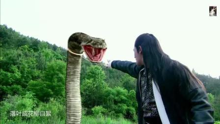女子被陆小凤打成重伤, 蟒蛇忠心救主, 最终人蛇亡, 好感人!
