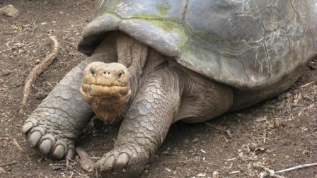 养得好能给你送终! 生于乾隆年间的乌龟, 已经送走3代饲养员了