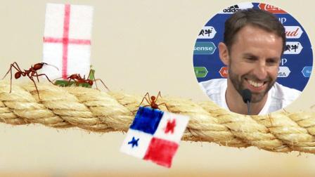 体坛嘿未够 第一季:蚂蚁预测英格兰逆转胜 快乐足球逗乐索斯盖特