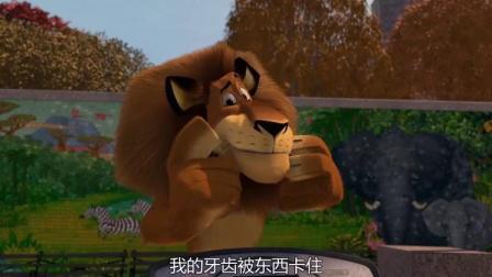 马达加斯加:爱力狮打断马蹄做白日梦,为了祝他生日快乐!