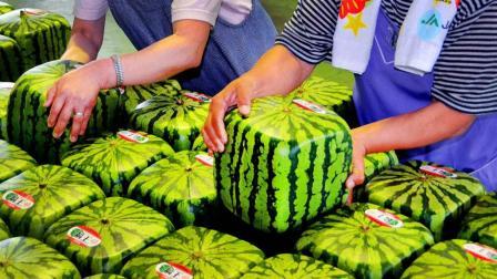 日本最贵的水果, 在中国几毛钱一斤, 大街上随处可见