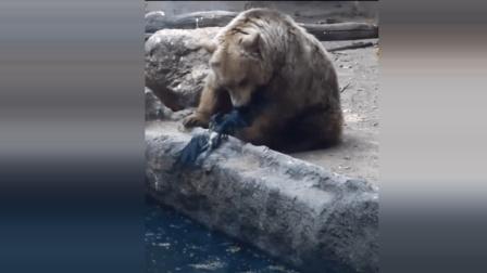 我以为棕熊会把鸟儿吃掉, 结果····