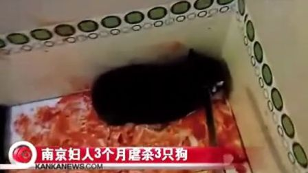 南京一妇人在自己的微博上 上传虐杀3只小狗的视频