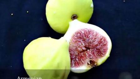 美国无花果品种展示视频