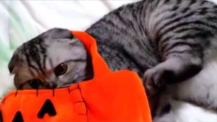 陈小能觉得这个南瓜包里有他的味儿废话,他两个月的时候就还被塞在里面拎着拍照呢