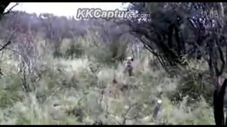 两只鬣狗赶走单只母狮