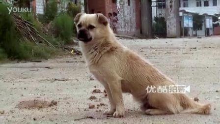 【拍客】狗狗霸占公路吓坏小朋友