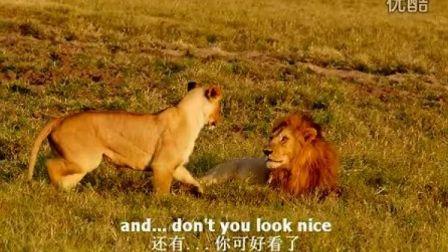 2012 African Love_非洲大猫的狂野爱情