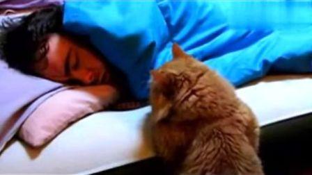 搞笑动物 搞笑自拍!主人的睡相好难看