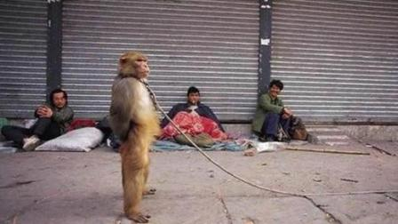 实拍被猴子各种戏耍, 太搞笑!