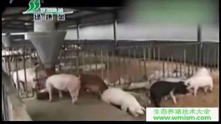 猪舍建设养猪技术