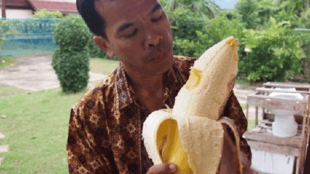 """涨见识了! 这种香蕉品种, 吃半个就是""""大胃王""""!"""