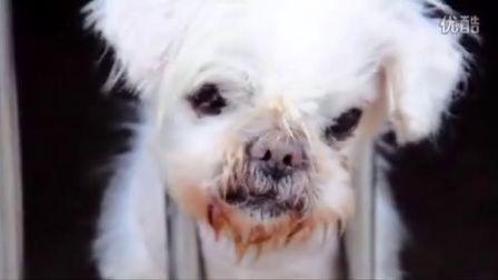 关于流浪狗的一些-- 记武汉流浪宠物救助站