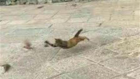 猫咪一秒神技飞扑麻雀, 叫人叹为观止, 喵: 你们对速度一无所知!