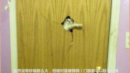猫星人: 虽然本猫的拳头没有砂锅那么大, 但是这个门那是小意思
