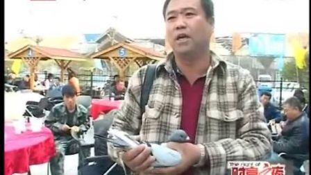 BTV采訪 北京永生鴿業 李永生鴿舍 賽鴿福洛英格斯信鴿種鴿出售賣