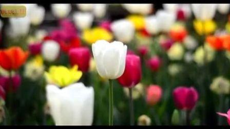 上海植物园花展(一)