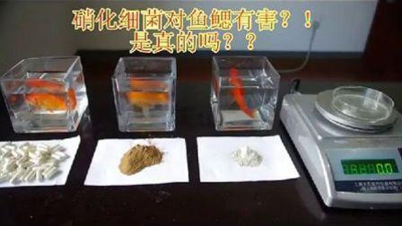 硝化细菌对鱼鳃有害??!!是真的吗?!!!
