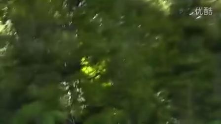 罗托鲁瓦树冠层之旅