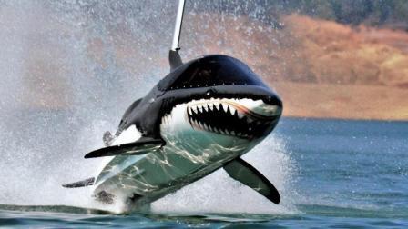 """在海上飞驰的""""鲨鱼"""", 酷到没朋友, 不知道吓坏多少人!"""