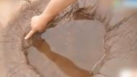 山東郯城發現300多個恐龍足跡世所罕見肉食類和食草類都有