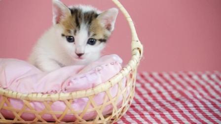 《学猫叫》——手风琴版