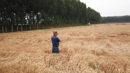 来自日本的麦田里的守望者, 他住在中国农村的理由是?