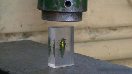 被玻璃封印的昆虫, 放到液压机下, 结果会怎样?