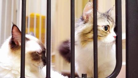 新来的猫咪遭到原住民们的强势围观: 她一定是来跟我们抢零食的!