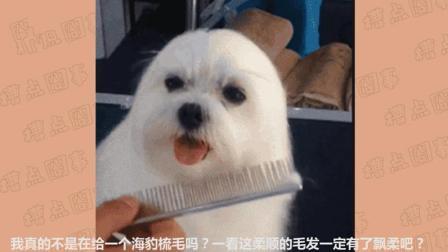 这汪星人的毛发太顺滑, 不仔细看还以为是海豹!