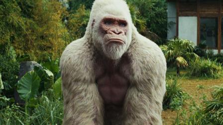 一口气看《狂暴巨兽》, 白毛金刚打怪兽
