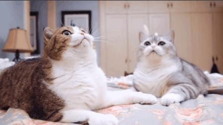 看到逗猫棒猫咪们激动得疯狂连击, 只有胖猫懒到模糊, 怕是只假猫吧?