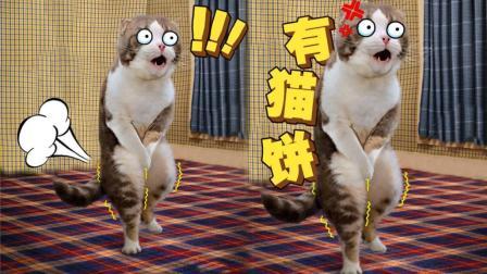 有猫饼! 不发神经的喵不是好喵!