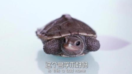 我姓王 麻烦各位给我的宠物龟取个名! 我取的名 它不喜欢!