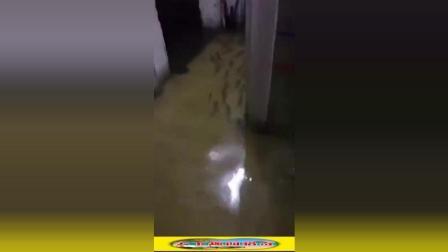 暴雨过后, 家里游来了一群鱼