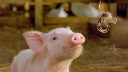 小猪为了不被主人杀掉, 每天都要学会各种技能! 一部喜剧奇幻电影