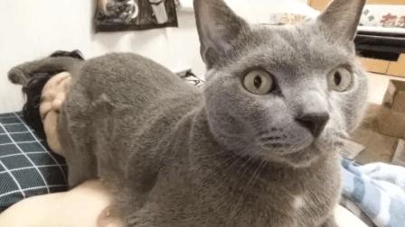 猫咪也会恶作剧, 主人睡的正香, 猫咪一屁股坐在主人脸上, 愣是把主人熏醒了