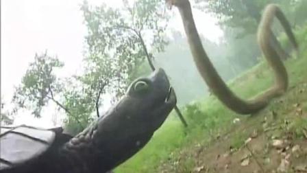 张三丰:大蛇打不过乌龟,你有没有眼花啊