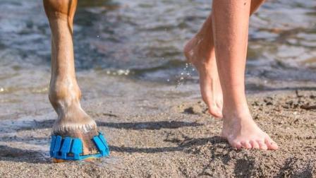 世界上最奇葩的鞋子, 专门给马设计, 让马跑得飞快!