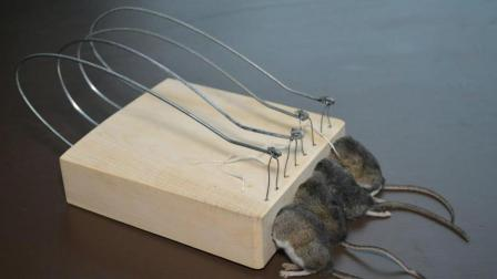 老外用12万伏特高压电网整治老鼠, 光看电弧就知道老鼠必死无疑!