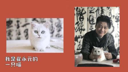崔永元的猫又来爆料了,这一次竟然为了这件事…