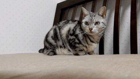 逗猫时间到了, 请欣赏猫咪的第一百零八式的伸懒腰的姿势