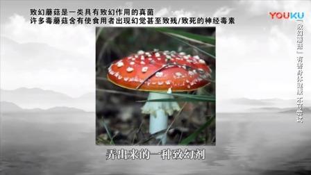荷兰最出名的两个东西:蘑菇和红灯区,一个不敢吃,一个不能试