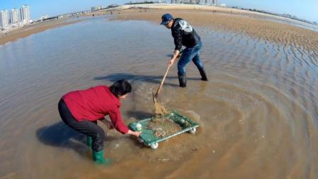 赶海挖花甲很难吗? 是你没用对方法, 看看农村小伙是怎么挖花甲的